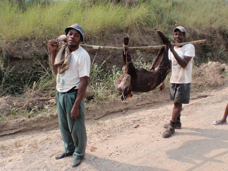 Gab 211 N Cazadores Furtivos Con Un Antilope Caballo World