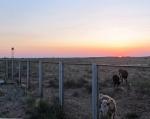 KAZAQUISTAN 1° ENTRADA 7. (LA FRONTERA POR KOTYAYEVKA) TUVIMOS LA VISITA DE UNAS VACAS