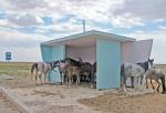 KAZAQUISTAN 1° ENTRADA 35. (EN RUTA A ATYRAOU) LOS CABALLOS ESPERANDO EL AUTOBUS