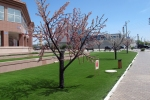 KAZAQUISTAN 1° ENTRADA 45. (ATYRAOU) SU ALCALDE SALIMZHAN NAQPAYEV A PUESTO POR TODAS PARTES ARBOLES DE PLASTICO