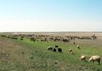 KAZAQUISTAN 1° ENTRADA 63. (CON DESTINO A UZBEKISTAN) PASTORES NOMADAS KAZAJOS