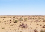 UZBEKISTAN 143 (EL DESIERTO DE KYZYL KUN) ES DE LOS MAS CALUROSOS DEL MUNDO, SE REGISTRÓ 57,1 °C EN JULIO DE 1983