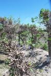 UZBEKISTAN 229 (LA VIDA EN SAMARCANDA) DESTROZAN LAS MOREAS AUNQUE CON EL TIEMPO RENACEN