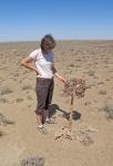UZBEKISTAN 65 (SHILPIQ) UNA CURIOSA PLANTA DEL DESIERTO DE QUM QIZIL