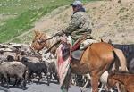 KIRGUISTAN 161 (DE ARSLANBOB A SUUSAMYR) SON UN POCO VIOLENTOS CON LOS ANIMALES