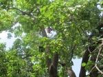 UZBEKISTAN 379 (SALIENDO DEL PAIS) ESTE SEÑOR TAN AMABLE INTENTA COJERNOS ALGUNOS ALBARICOQUES
