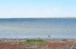 KAZAQUISTAN -2° ENTRADA 39 ( EL LAGO ALAKOL) EL RIO URDZHAR, VIERTE SUS AGUAS EN EL LAGO