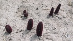 KIRGUISTAN 239 (EL LAGO ISSYK KUL) NACEN EN GRUPO EN LA ARENA