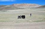 MONGOLIA 25 (HACIA KHOVB) PASTOR DE JAKS