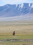 MONGOLIA 27 (HACIA KHOVB) LOS CRIOS EN LA MESETA VIVEN PRACTICAMENTE SIN AMIGUITOS