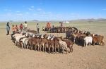 MONGOLIA 167 (GOBI-HACIA GUCHIN US) ENCUENTRO CON UNOS NOMADAS