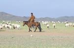 MONGOLIA 175 (GOBI-HACIA GUCHIN US) LOS CABALLOS MONGOLES SUELEN SER DE TALLA MUY PEQUEÑA