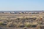 MONGOLIA 182 (GOBI- GUCHIN US) TIENE UNOS 2.300 HABITANTES Y ESTA A 104 KM DE ARVAIKHEER