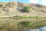 MONGOLIA 362 (KARAKORUM) UNO DE LOS RAROS ARBOLES EN EL RIO ORKHON