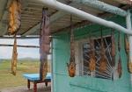 MONGOLIA 517 (HACIA DARHAN) PESCADO SECO DEL RIO ORKHON