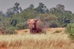 MALI 167 (LOS ELEFANTES DEL DESIERTO DE GURMA) ES UNA ESPECIE DE ELEFANTE AFRICANO ADAPTADA DURANTE SIGLOS A LAS CONDICIONES DESERTICAS