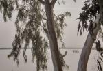 SENEGAL 3 (RICHARD TOLL) LA TRDUCCION WOLOF LA LENGUA LOCAL SIGNIFICA EL JARDIN DE RICHARD. ES UN EDEN PARA LA OBSERVACION DA AVES. SE SITUA A 370 KM DE DAKAR