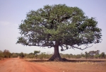 BURKIINA FASO 35 (HACIA LERABA Y KENEDOUGOU) MAS AL SUR LA PISTA ESTA VINIENDO MAS ROJA