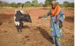 BURKIINA FASO 43 (EN UN POBLADO DE LA ETNIA SENUFO) LOS MAS ANTIGUOS SENUFOS SE INSTALARON EN BURKINA FASO, EN EL SUROESTE DEL PAIS EN LAS PROVINCIAS DE LERABA Y KENEDOUGOU