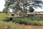 BURKIINA FASO 56 (TIEBELE, UN POBLADO DE LA ETNIA KASSENA) SE ENCUENTRA AL SURESTE DE BURKINA FASO, A 177 KM DE LA CAPITAL OUAGADOUGOU