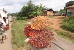 GHANA 29 (EN DIRECCION AL SUR) FRUTO USADO PARA LA OPTENCION DE ACEITE, VIENE DEL ARBOL ELAEIS GUINEENSIS, LLAMADO PALMA ACEITERA AFRICANA
