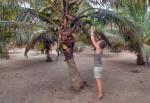 GHANA 75 (POR LA COSTA DE GHANA - REGION DE CAPE COAST) RECOGIENDO ALGUNOS COCOS