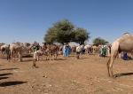 NIGER 14 (MERCADO DE DROMEDARIOS DE MADAOUA) LOS ANIMALES SE VENDEN O SE CAMBIAN
