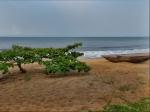 CAMERUN 215. POR EL DEPARTAMENTO DEL OCEANO. LOS ALREDEDORES DEL CAMPING, 1