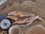 CAMERUN 234. POR EL DEPARTAMENTO DEL OCEANO. (LA CIUDAD DE KIRIBI - LA LONJA) ... HAY SOBRE TODO CORBINAS Y PARGOS