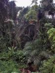 GABON 16. (AL NORTE) DEL ECUADOR). LA SELVA ES MUY TUPIDA 1