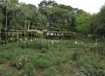 CONGO KINSASA 11. (KISANTU) EL JARDIN BOTANICO ES MUY BONITO PERO LE FALTA INFORMACION